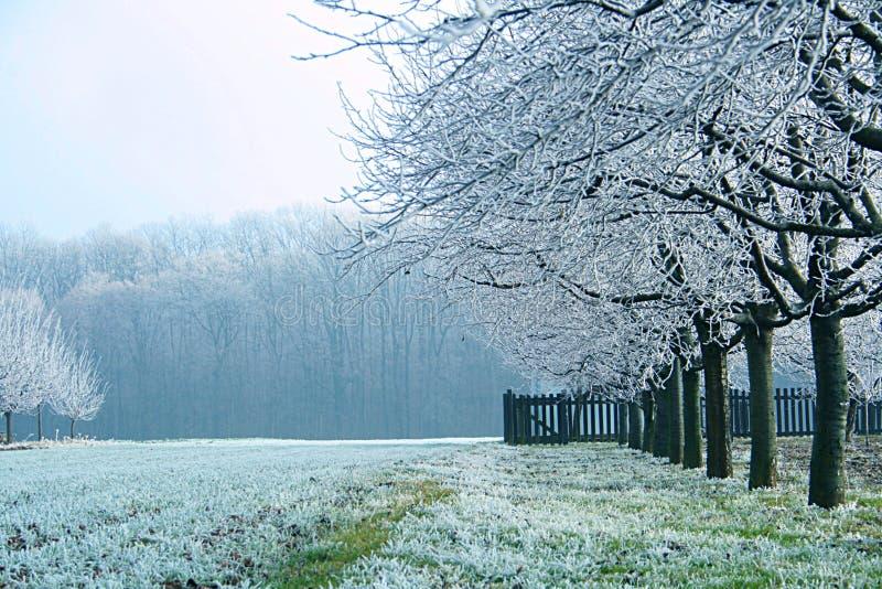 冷有薄雾的早晨 免版税库存照片
