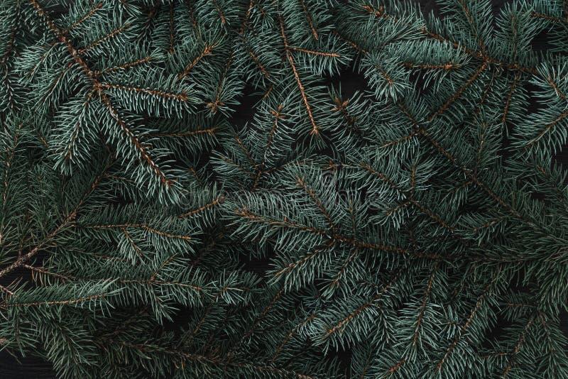 冷杉分支冬天背景  袋子看板卡圣诞节霜klaus ・圣诞老人天空 顶视图 Xmas祝贺 免版税图库摄影