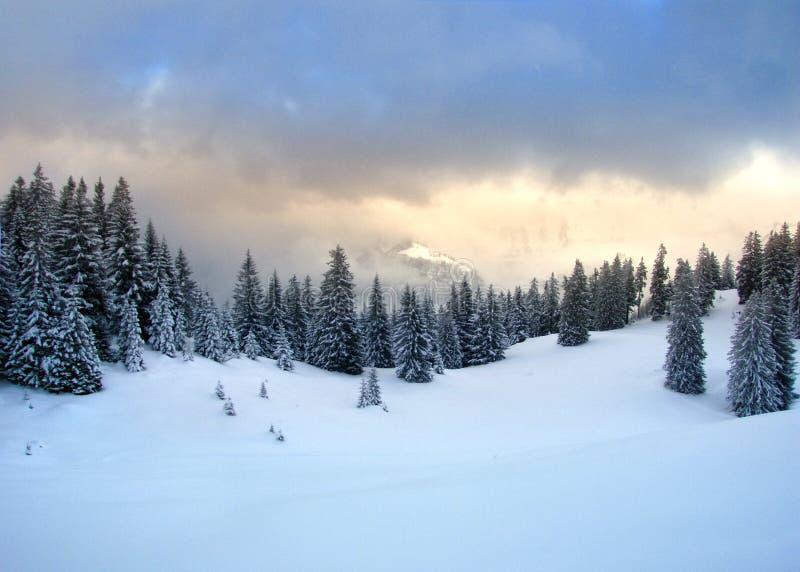 冷杉木冬天 库存图片