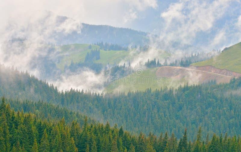 冷杉由云彩的森林盖子 免版税图库摄影