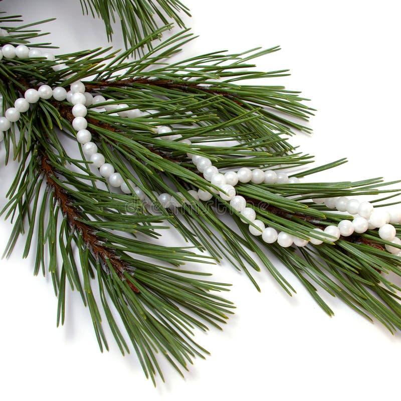 冷杉项链结构树 免版税库存照片
