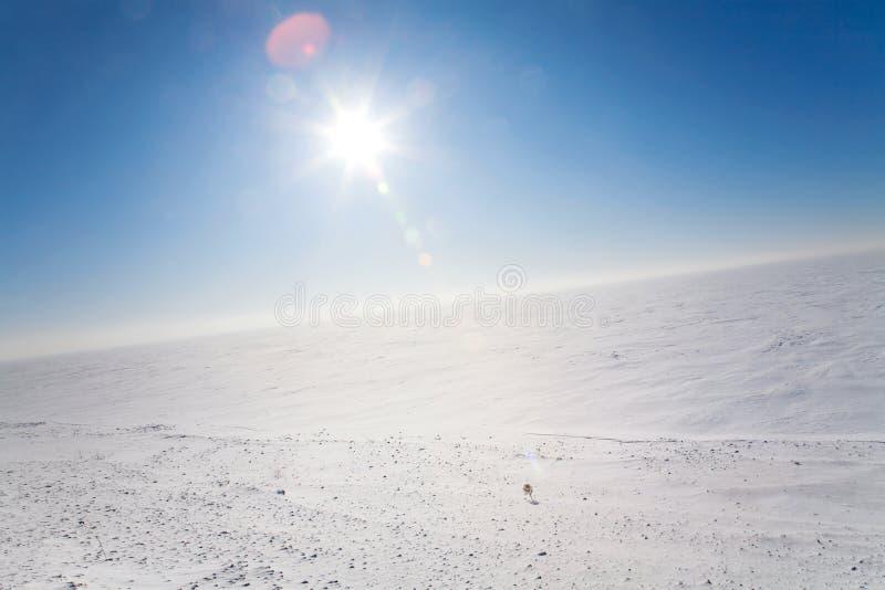 冷沙漠冰 免版税库存图片