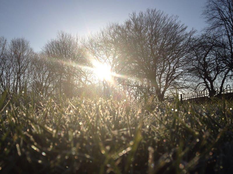 冷淡的冬天早晨 免版税库存照片