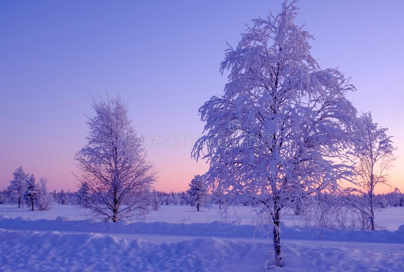 冷淡的冬天晚上在以远拉普兰极圈 树和月亮在五颜六色的日落背景 库存图片