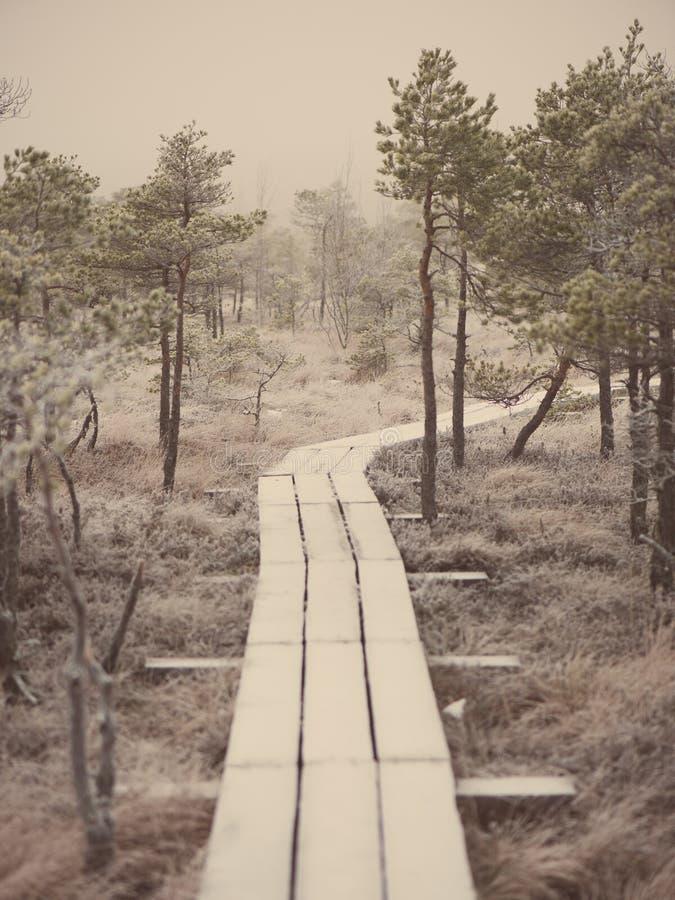 冷淡的冬天沼泽的-减速火箭的葡萄酒木木板走道 免版税库存图片