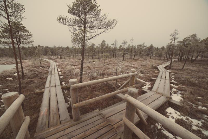 冷淡的冬天沼泽的-减速火箭的葡萄酒木木板走道 免版税图库摄影