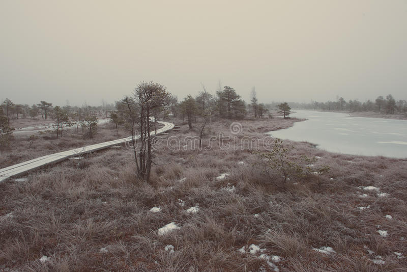 冷淡的冬天沼泽的-减速火箭的葡萄酒木木板走道 库存照片