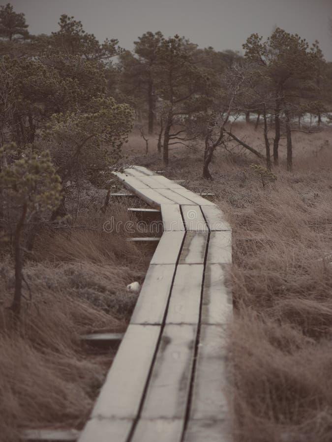 冷淡的冬天沼泽的-年迈的照片木木板走道 库存图片