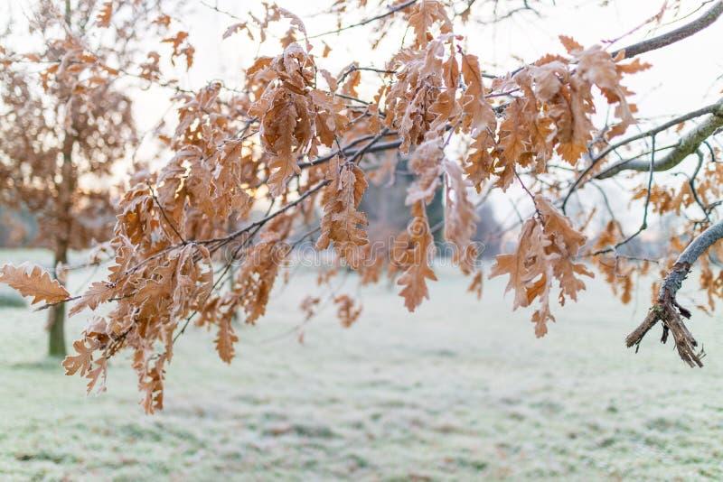 冷淡的早晨 免版税图库摄影