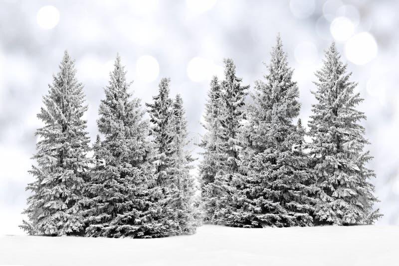 冷淡的树有闪烁背景 免版税库存照片