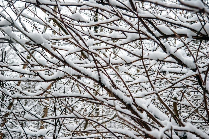 冷淡的树枝在冬天 库存图片