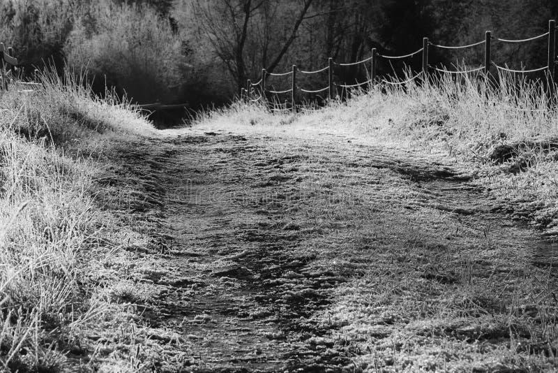冷淡的森林公路每冷的晴朗的好天气 单色 免版税库存照片