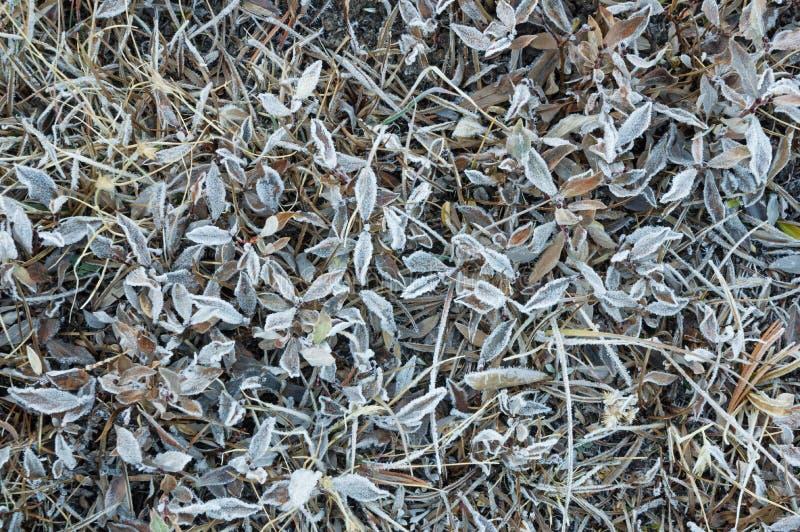 冷淡的草甸 免版税库存图片