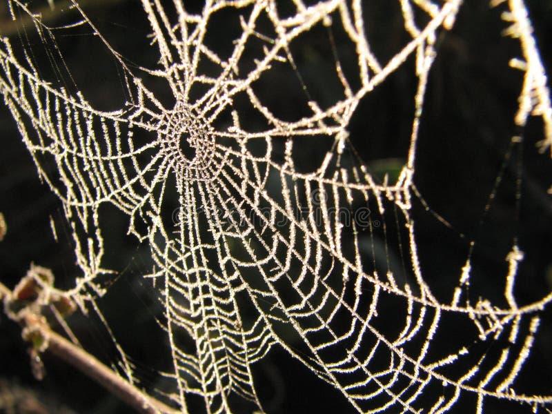 冷淡的蜘蛛网 免版税库存图片
