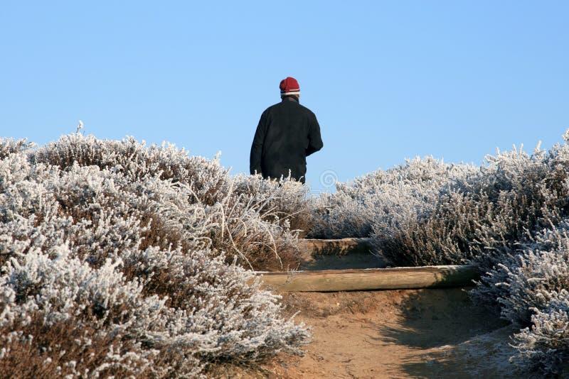 冷漠横向的步行者 免版税库存图片