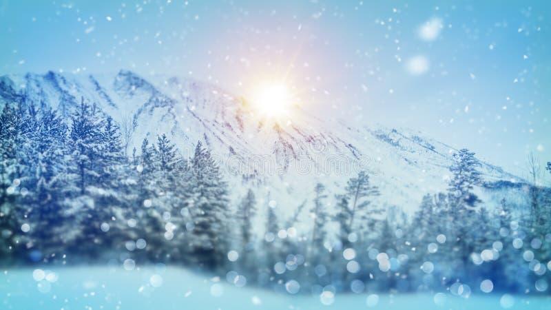 冷漠的森林圣诞节场面 免版税库存图片