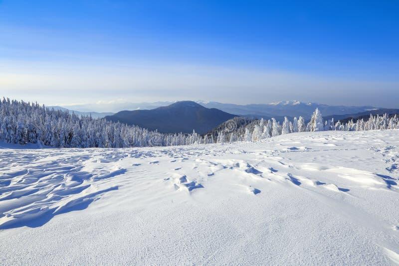 冷的冬天晴天 神奇,秘密,意想不到,山世界  在用雪盖的草坪好的树 免版税库存照片