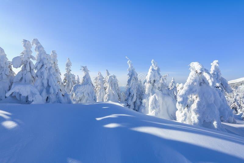冷的冬天晴天 神奇,秘密,意想不到,山世界  在用雪盖的草坪好的树 免版税图库摄影