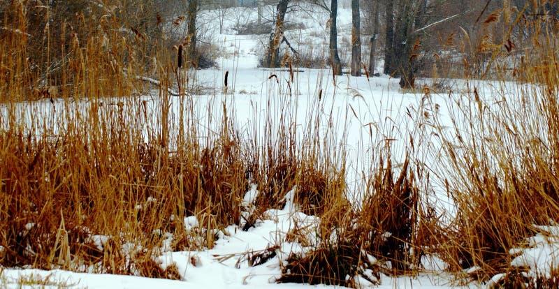 冷的冬天阴沉的风景给芦苇的温暖的口气赋予生命 库存照片