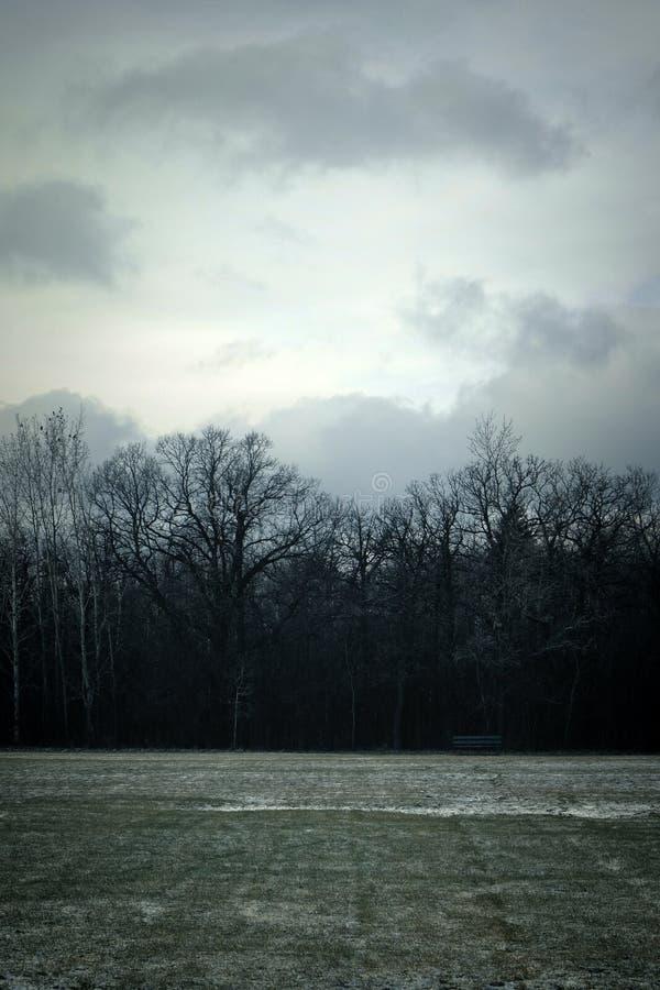 冷的冬天领域 库存图片