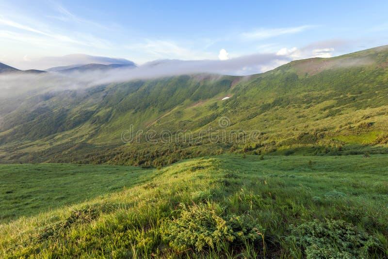 冷的有雾的夏天早晨全景在喀尔巴阡山脉的 库存照片
