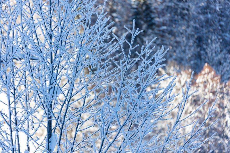 冷的瑞士的森林冬天树 免版税图库摄影