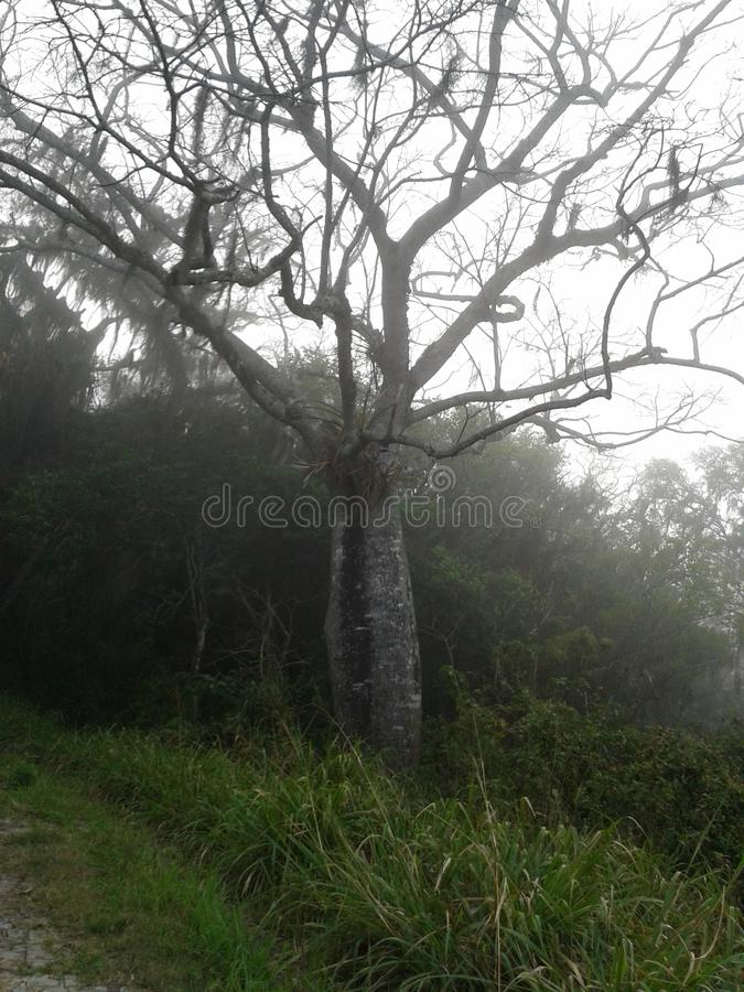 冷的巴西树 免版税库存图片