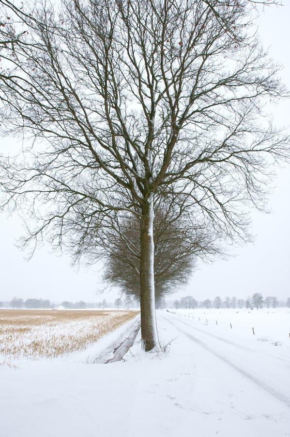 冷结构树 免版税图库摄影