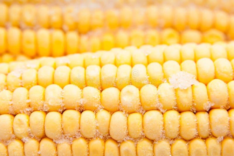 冷冻玉米 免版税库存图片