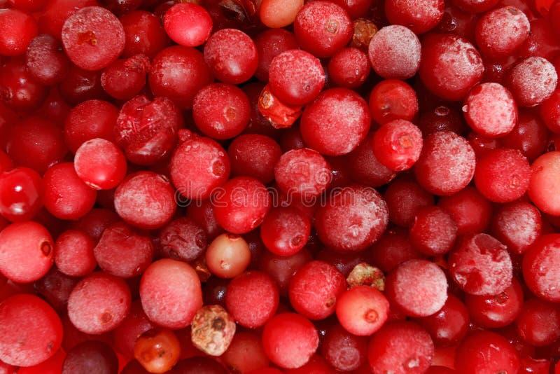 Download 冷冻红浆果的宏观射击 库存图片. 图片 包括有 成份, 水多, 空白, 原始, 特写镜头, 发狂, 射击 - 59101839