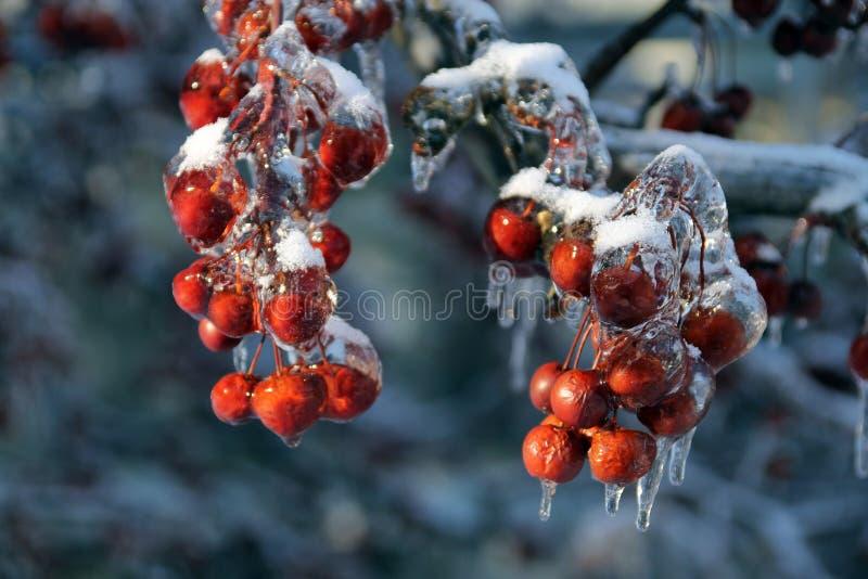 冷冻莓果 免版税库存图片