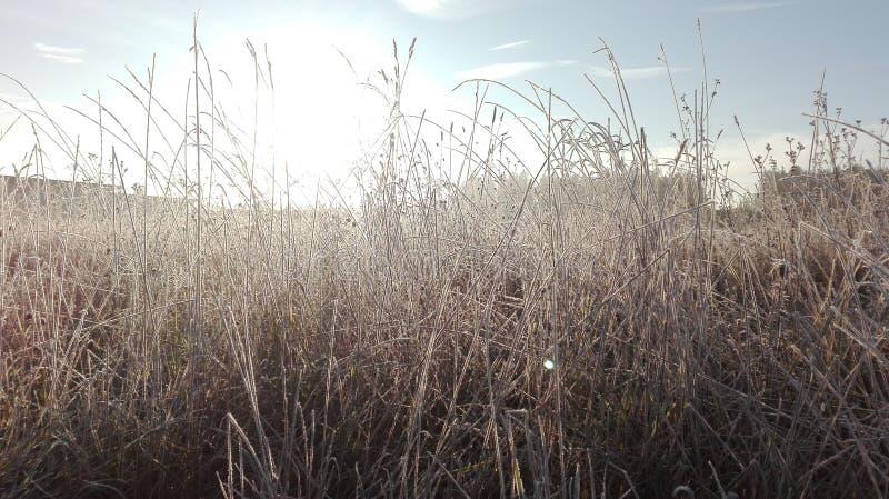 冷冻麦子 图库摄影