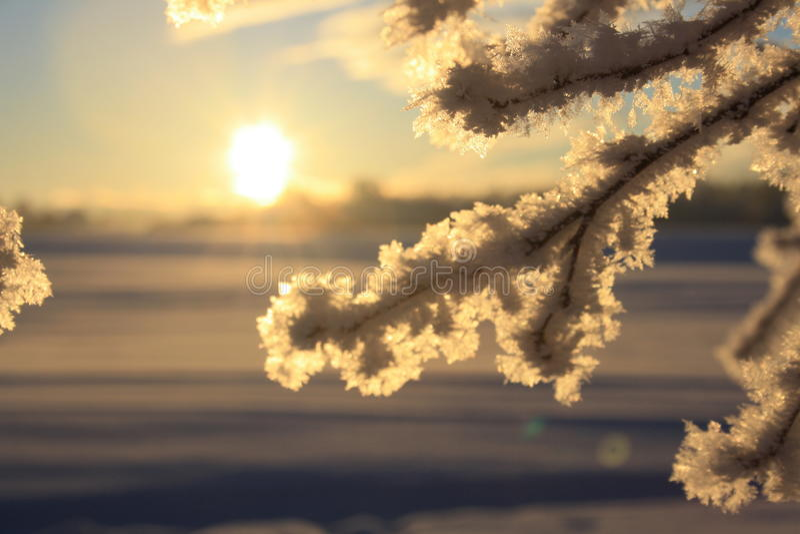 冷winterday 免版税库存图片