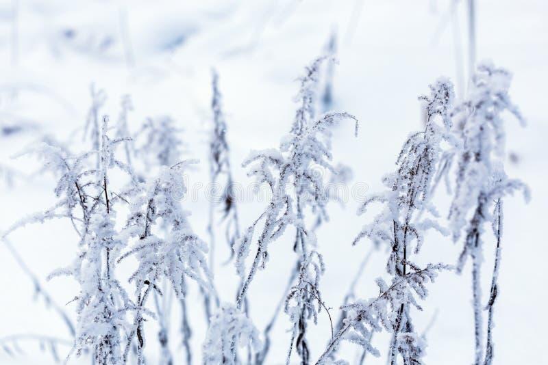 冻干草在与选择聚焦的冬天多云白天 库存照片