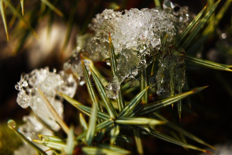 冻植物在寒冷冬天夜以后 免版税库存照片
