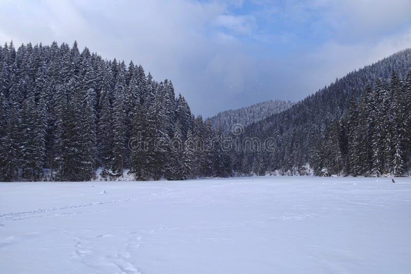冻湖冬天风景在森林里 免版税库存照片