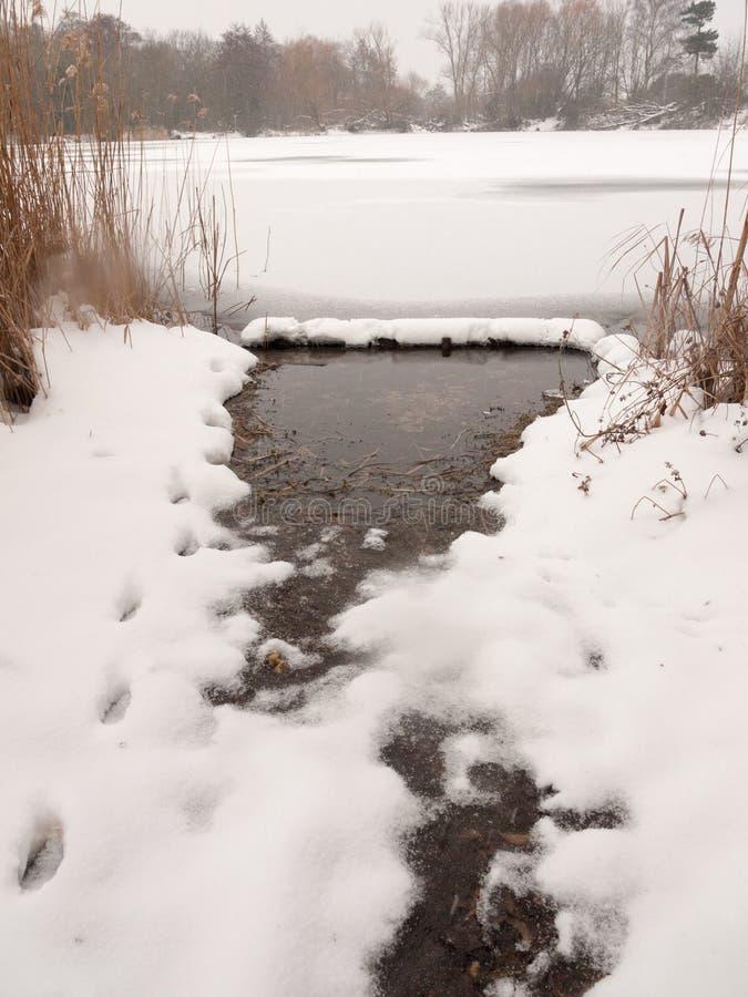 冻湖表面冬天雪树用茅草盖水 免版税图库摄影
