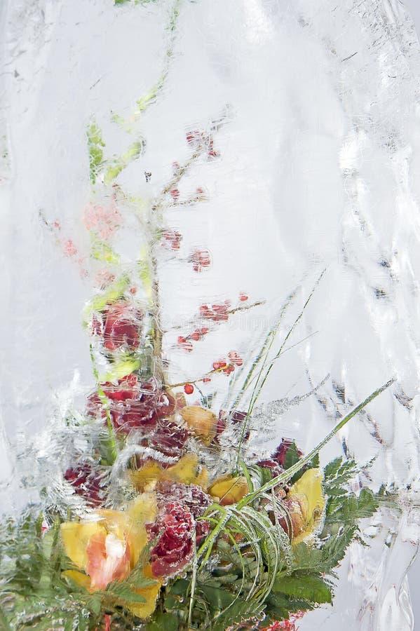冻结五颜六色的花束 库存图片