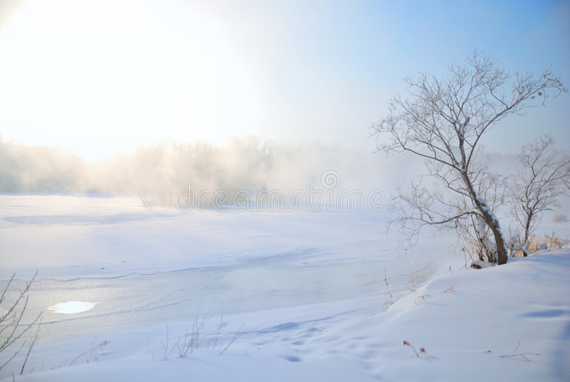 冻结偏僻的正确的河结构树 库存照片