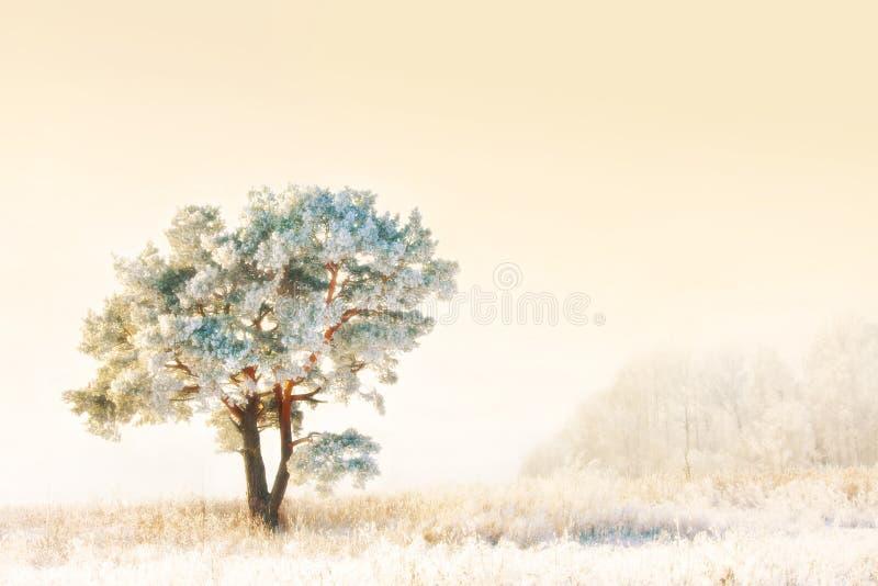 冻结杉木结构树 免版税库存照片