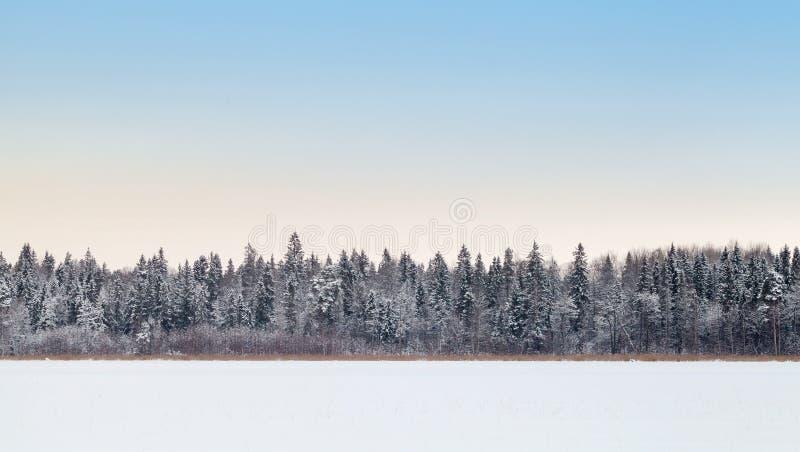 冻结湖的沿海森林冬天季节的 免版税库存照片