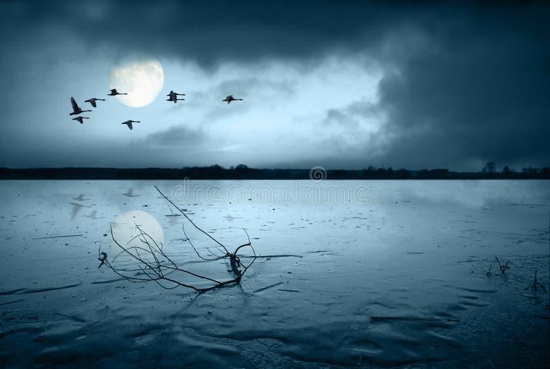 冻结的湖月光 免版税库存照片