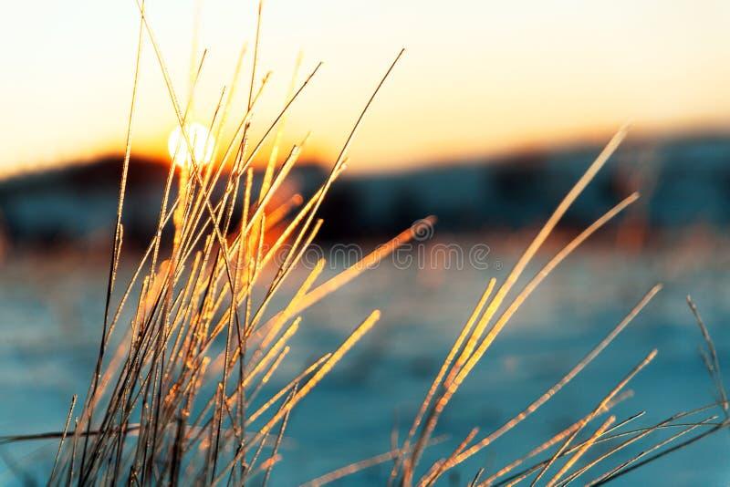 冻结的草横向日落水冬天 冰冷的草宏观照片  库存照片