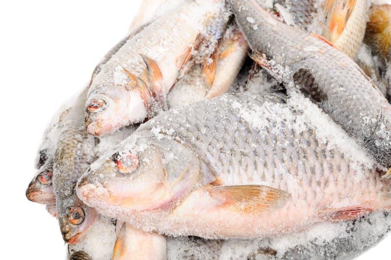 冻结的鱼 免版税库存照片