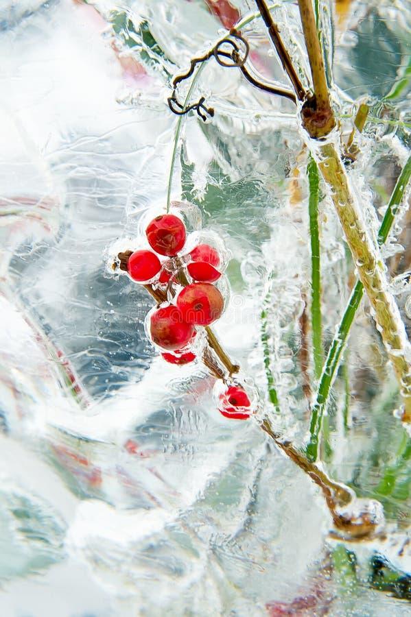 冻结花束用红色浆果 免版税图库摄影