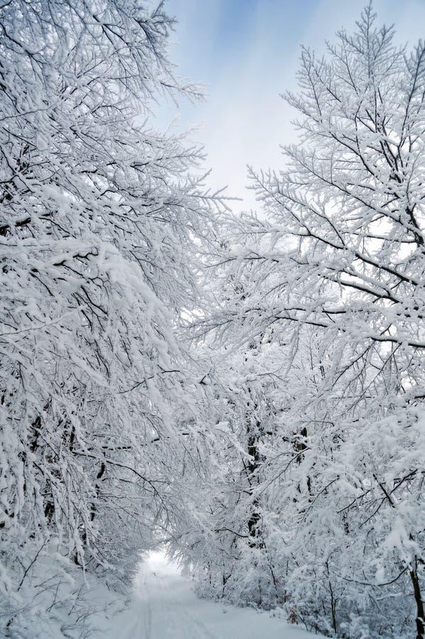 冻结路连续结构树冬天 库存图片