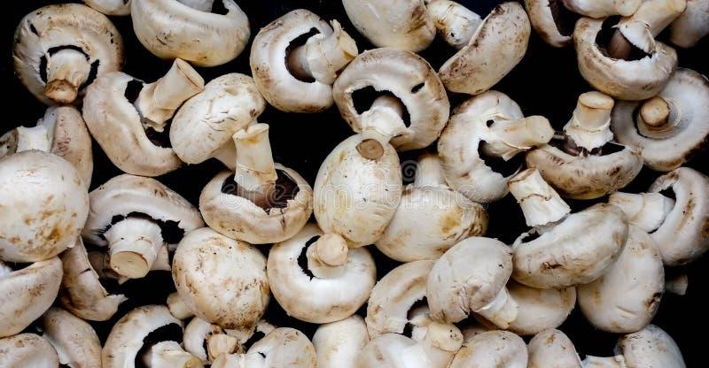准备优秀饭食的精妙的蘑菇 免版税库存图片