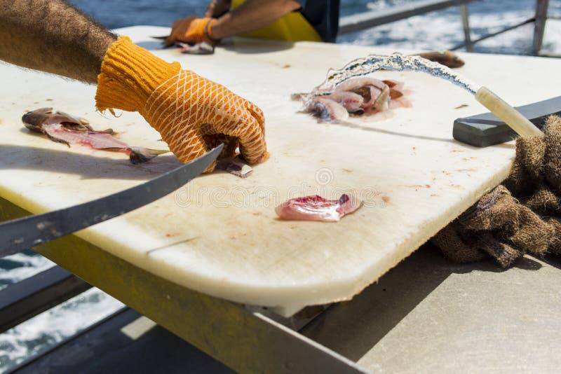 准备在切板的船的渔夫白色海鱼 免版税库存图片