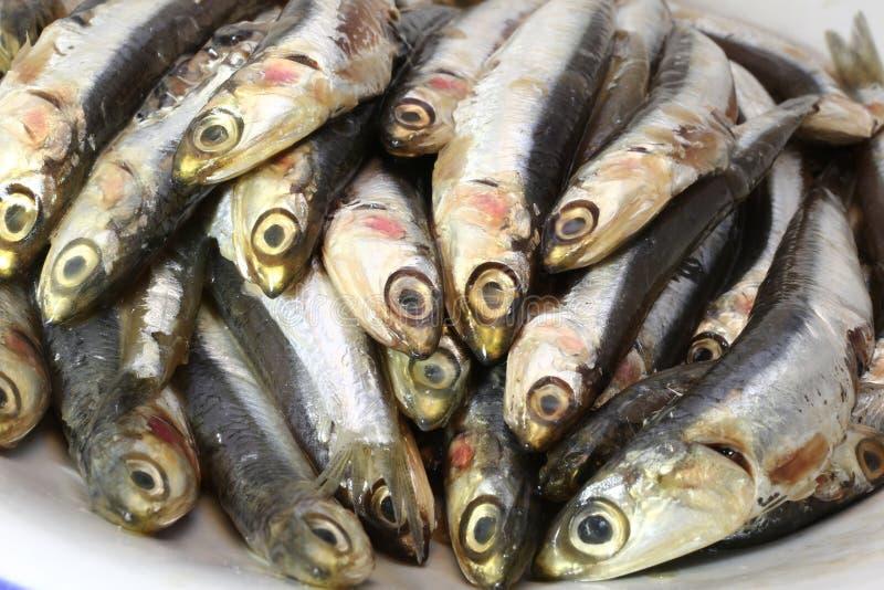 准备好未加工的鲥鱼烹调 免版税库存图片