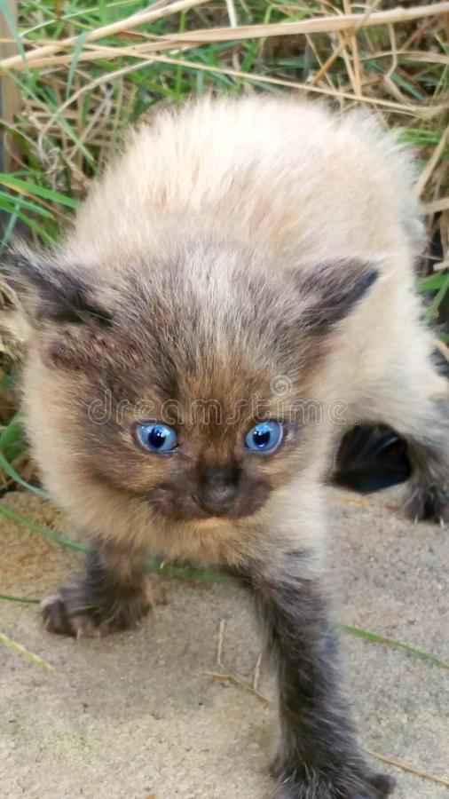 准备好的小猫触击 图库摄影